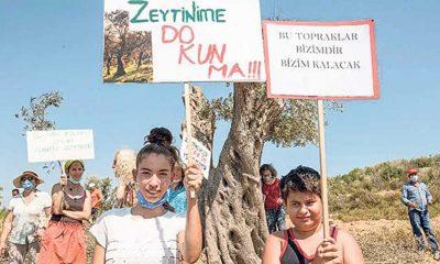 Seferihisar'da 'Asırlık zeytinlikleri kesmeyin' nöbeti