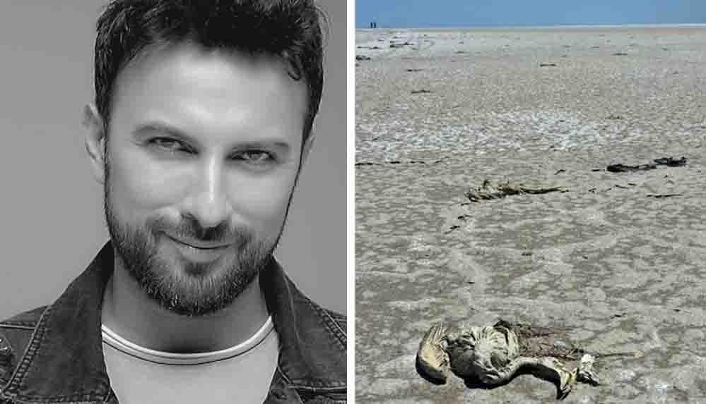 Tarkan'dan Tuz Gölü'ndeki flamingo ölümlerine sert tepki: Kader değil katliam