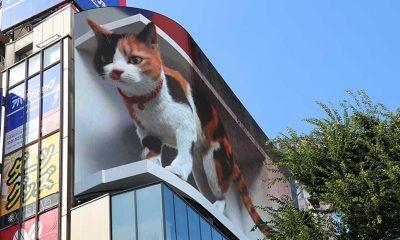 Tokyo'nun yeni misafiri 3D kedi, şehri izliyor ve halkı selamlıyor
