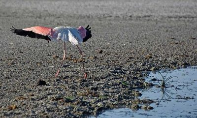 Tuz Gölü için yeni uyarı: Ölümlerden sonra flamingolar göle gelmeyebilir