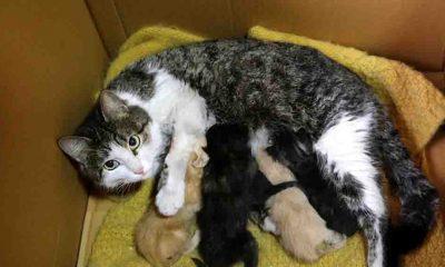 Yavruları ölen kedi, annelerini kaybeden yavrulara kucak açtı