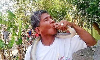 """Yılan uzmanı """"zehre bağışıklığım var"""" dedi, kobrayı öpmeye çalışırken öldü"""