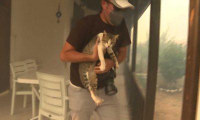 Alevlerin sardığı sitede mahsur kalan kedi bir gazeteci tarafından kurtarıldı