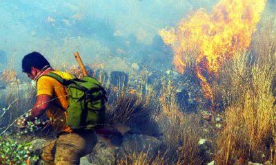 Bodrum tepeleri alev alev yanıyor