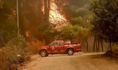 Dünya artan orman yangınlarının etkisi altında