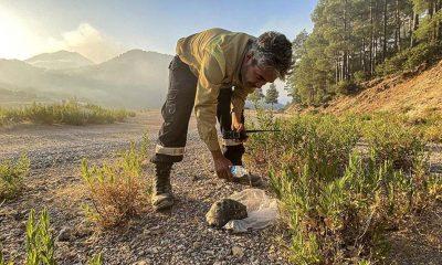 Gündoğmuş'taki yangında mahsur kalan kaplumbağayı orman işçileri kurtardı