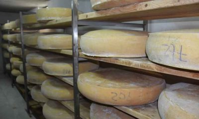Kars gravyer peynirinin 9 ay süren lezzet yolculuğu