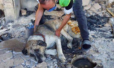 Şanslı, tamamen yanan evden duyarlı vatandaşlar tarafından kurtarıldı