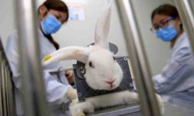 Meksika'da hayvanlar üzerinde yapılan kozmetik testler yasaklanıyor
