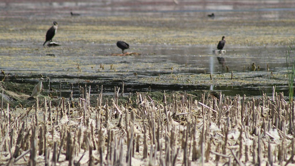Beyşehir Gölü kuraklığın etkisinde
