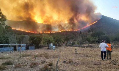 Bodrum Gümüşlük'teki̇ yangın durdurulamadı, evler boşaltılıyor
