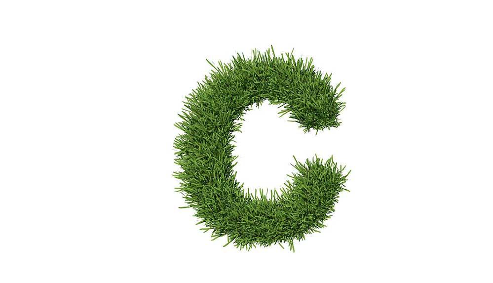 C harfi ile başlayan bitkiler