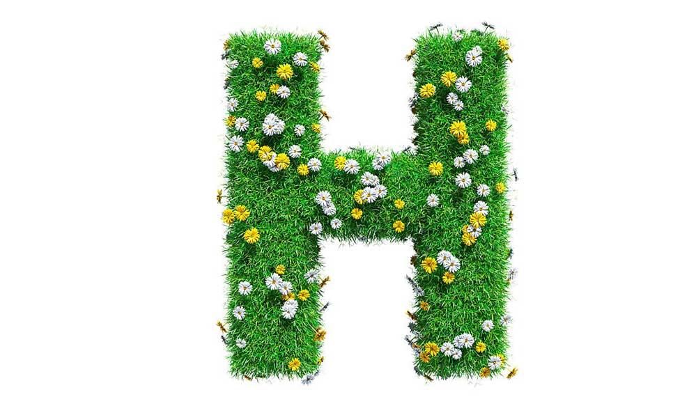 H harfi ile başlayan bitki isimleri