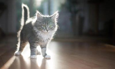 10 yıldır kayıp olan kedi, mikroçip sayesinde evine döndü