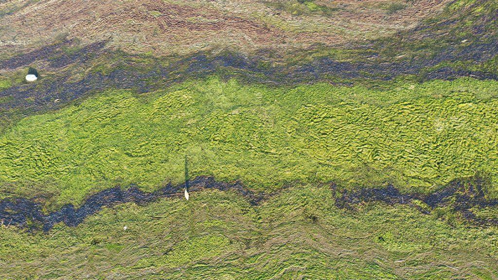 Ağrı Dağı Milli Parkı'nın bazı bölümleri yosunla kaplandı