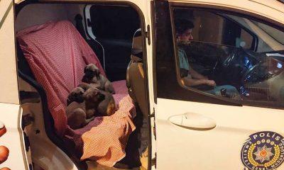 Ağzı bağlı torbaya konularak ölüme terk edilen köpek yavruları kurtarıldı