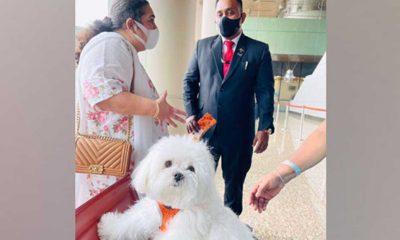 """Hindistan'da kadın yolcu köpeğiyle rahat seyahat etmek için """"business class""""ı kapattı"""