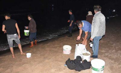 Batı Karadeniz'de tonlarca balık kıyıya vurdu; eline çuvalı, kovayı alan sahile koştu