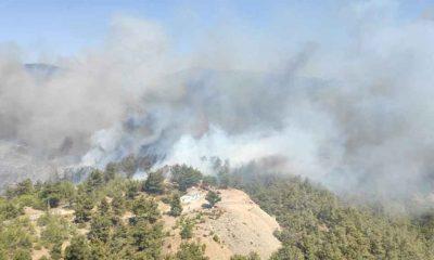 Bodrum'da çıkan orman yangınına müdahale ediliyor