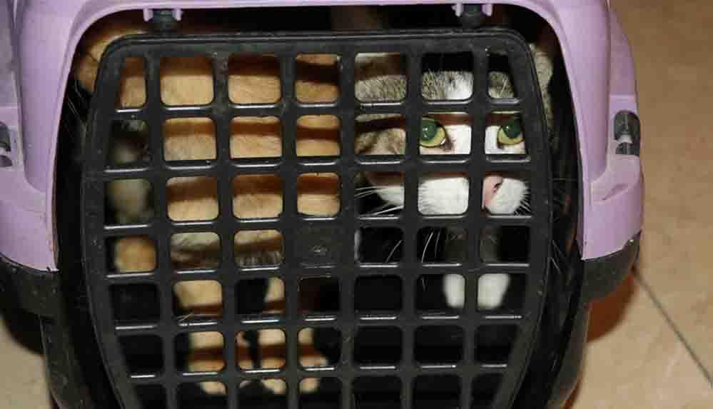 Bolu'da kapısı çilingir yardımıyla açılan daireden 50 kedi çıkarıldı