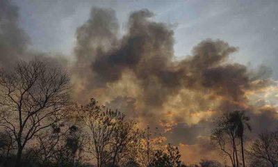 Brezilya Amazonlarında yangınlar ağustosta beş kattan fazla arttı