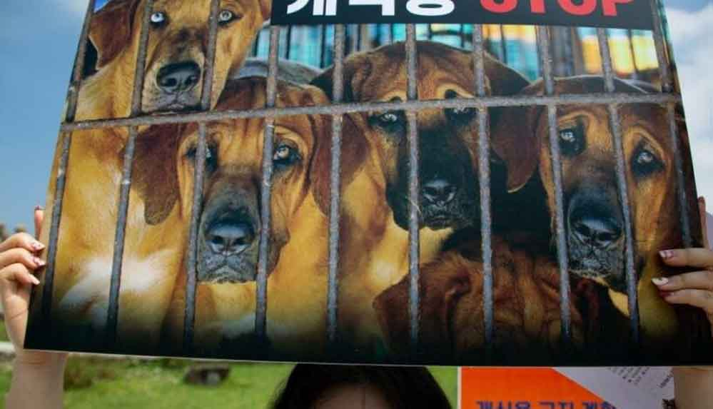 Güney Kore'de köpek eti tüketiminin yasaklanması gündemde