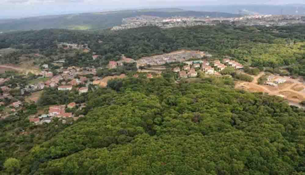 Kuzey Ormanları talan ediliyor