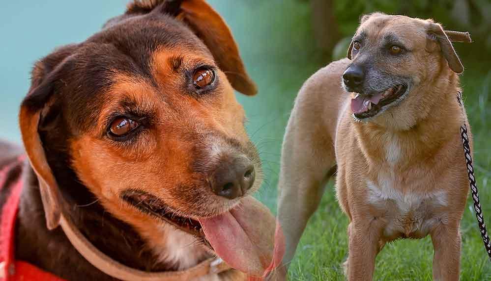 Manavgat'taki orman yangınında ölen çiftin köpekleri yeni sahiplerini arıyor