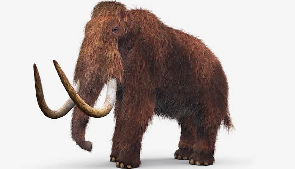 Nesli tükenen mamutları geri getirmeyi planlıyorlar