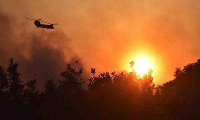 Orman yangınlarıyla ilgili 15'in üzerinde soruşturma dosyası açıldı