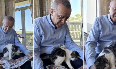 """Erdoğan'dan kedili paylaşım: """"Aybike'nin kedisi Pıt Pıt Şeker"""""""