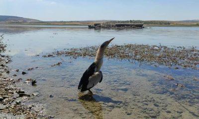 Şanlıurfa'da tedavisi tamamlanan balaban kuşu doğaya bırakıldı