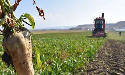 Şeker pancarı fiyatı üreticiyi memnun etmedi̇: Yüzde 25 zammı müjde olarak göstermek gerçekçi̇ değil