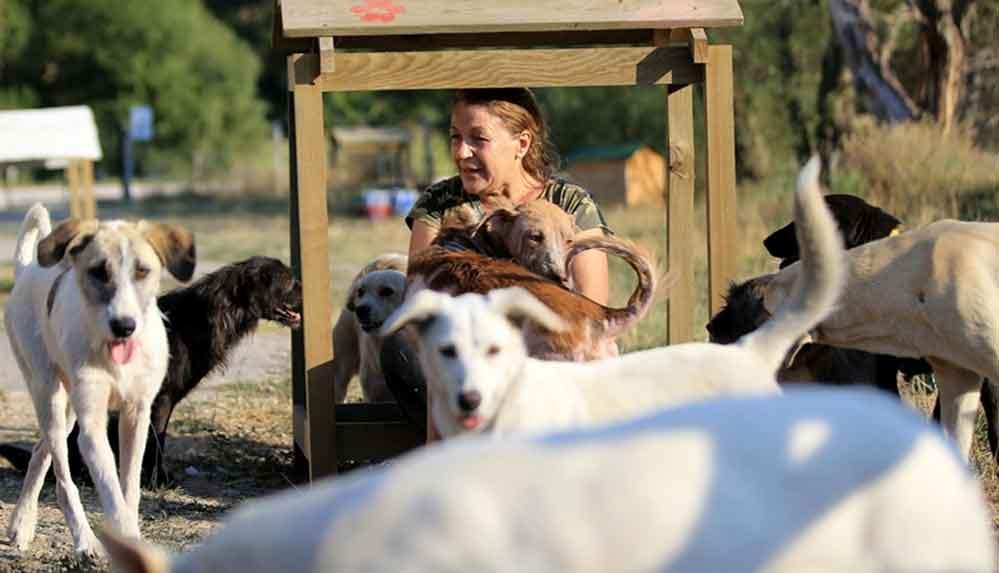 Sokak hayvanlarına bakabilmek için terzi dükkanını kapattı, 15 yıldır gönüllü bakıcılık yapıyor