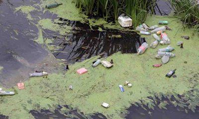Tunca Nehri çöp ve yosunlarla kaplandı