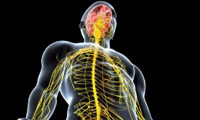 Yeni jenerasyon bilgisayar arayüz sistemi, beyinde yeni tedavilerin önünü açabilir