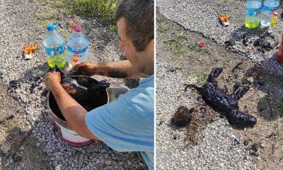 Zifte yapışan 3 köpek yavrusu hayvansever öğretmenin sayesinde kurtarıldı