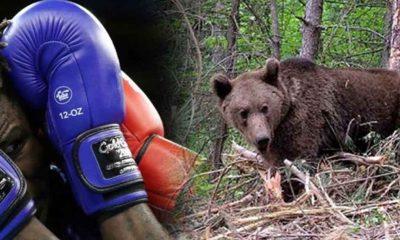 Ayıyla dövüşen Rus boksör Ilya Medvedev'in durumu ağır