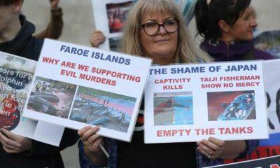 Faroe Adaları'ndaki yunus katliamı Londra'da protesto edildi