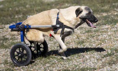 Hayvanseverlerin kurduğu dernek 170 köpeğin sıcak yuvası oldu