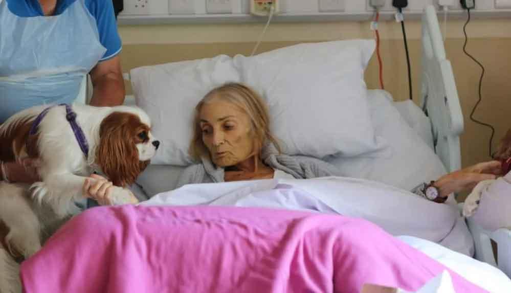 Ölüm döşeğindeki yaşlı kadından atına ve köpeklerine hüzünlü veda