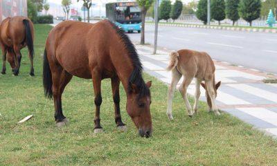 Manisa'da yılkı atlarını yakalamaya çalıştığı iddia edilen iki kişi gözaltına alındı