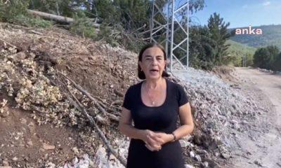 CHP'li Süllü: Kızıl geyiklerin yaşam alanı koca koca kepçelerle talan ediliyor