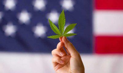 ABD'de bir bölgede artan marihuana çiftlikleri sebebiyle acil durum ilan edildi